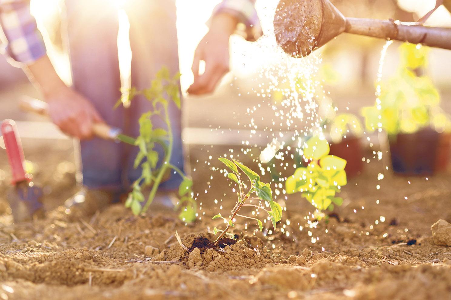 Menschen bei der Gartenarbeit