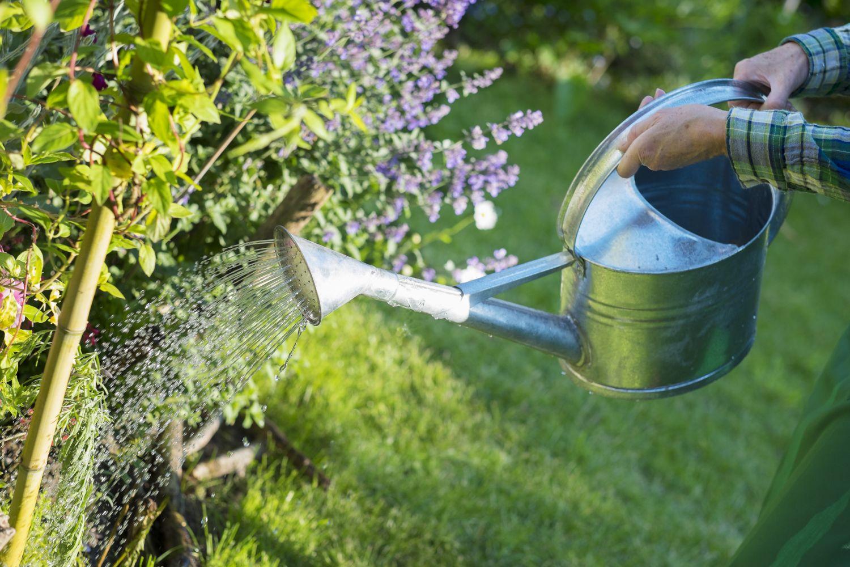 Jemand gießt mit einer Kanne Gartenpflanzen