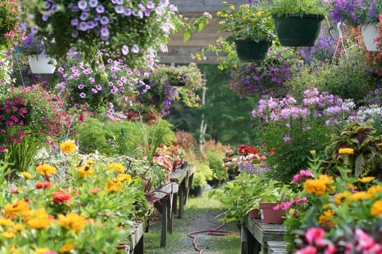 Garten voller bunter Blumen